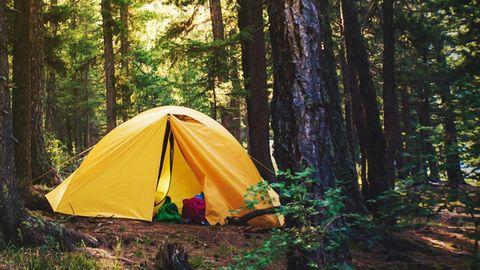 Gelbes Zelt im Wald