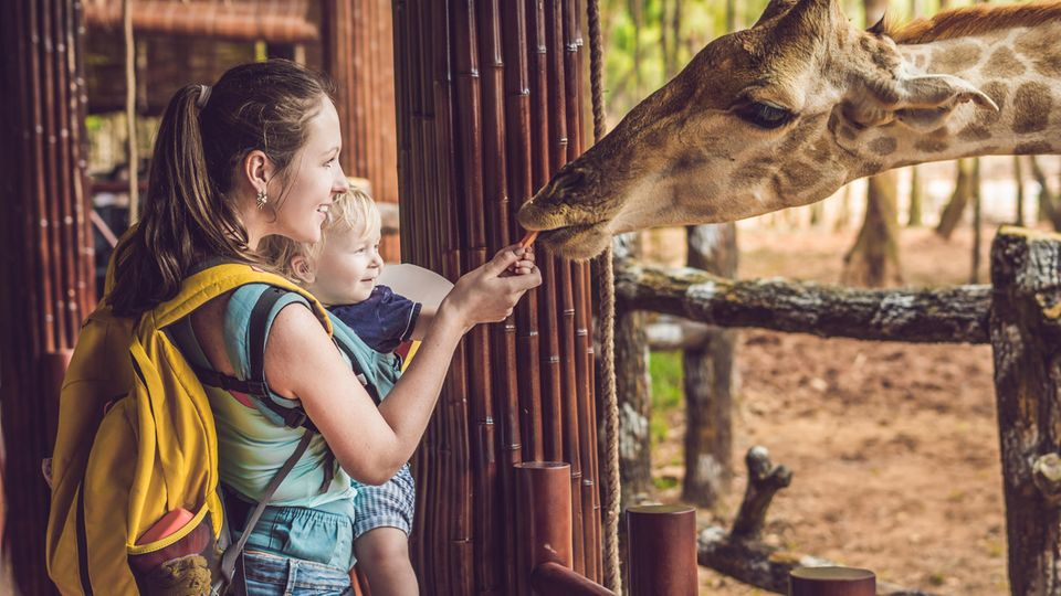 Mutter hält Baby auf dem Arm und füttert eine Giraffe