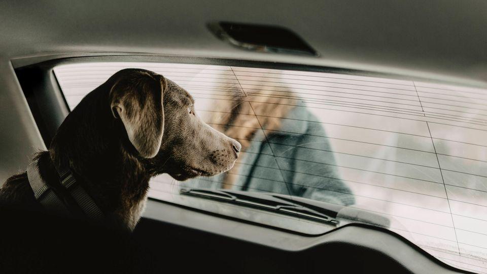 Ein Hund wartet in einem parkenden Auto.