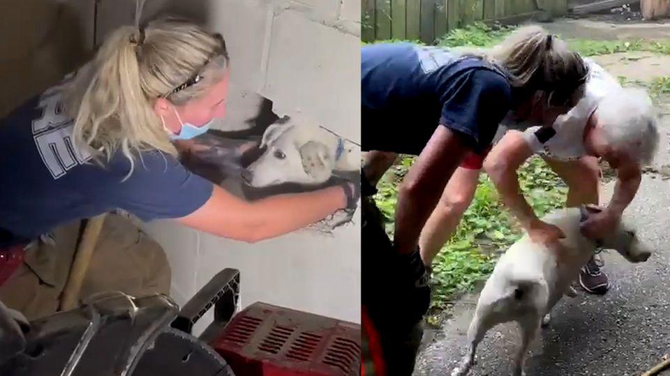 Hund war fünf Tage vermisst – Feuerwehrfrau rettet Hund mit Vorschlaghammer
