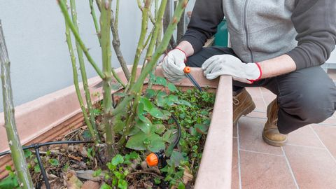 Ein Mann bewässert seine Pflanzen