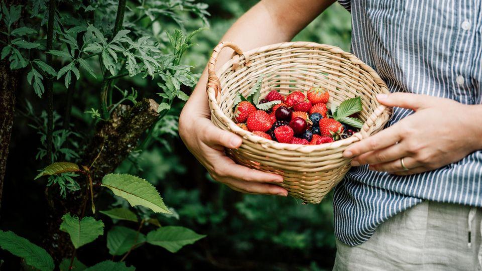 Frau sammelt Beeren im Garten