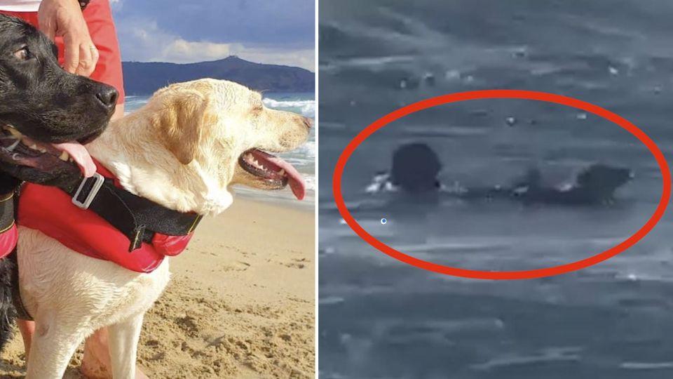 Zwei Hunde retten ein Mädchen in Italien