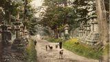 Schon um 1890 grasten zahme Rehe im Kasuga-Park in Nara. Es heißt, diese Hirsche seien heilige Boten der Shinto-Götter.