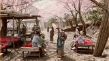 Japerinnen in Nogeyama