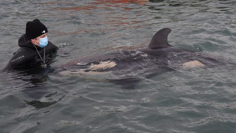 Orca-Babym Neuseeland