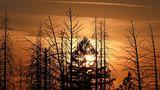 Oroville, USA. Die Sonne geht hinter toten und verbrannten Kiefern und Pinien unter. Seit einem Jahr ragen die schwarzen Baumskelette in den Himmel Kaliforniens. Wie im vergangenen Jahr wird der Golden State im Westen der USA auch in diesem Juli von verheerenden Waldbränden heimgesucht.