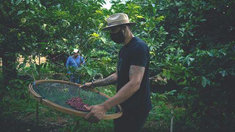 Die brasilianischen RegionAlta Mogiana ist berühmt für ihre Kaffeeproduktion. In den letzten Jahren führen Wetterextremeimmer wieder zu ertragsarmenErnten.