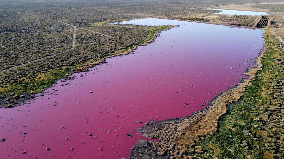 Pinkes Wasser in der Corfo-Lagune in Argentinien