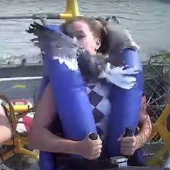 Bei Fahrt im Vergnügungspark: Möwe fliegt Teenager ins Gesicht.