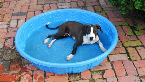 Ein Hund steht in einem Pool