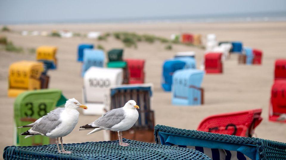 Zwei Möwen sitzen auf einem Strandkorb am Strand der Nordseeinsel Juist