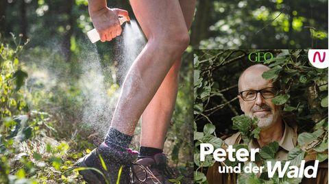 In dieser Folge beschäftigt sich Peter Wohlleben mit den Gefahren durch Zecken