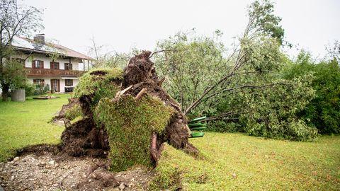 Entwurzelter Baum in der OrtschaftHalfing