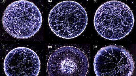 Mikroskopaufnahmen von Whisky
