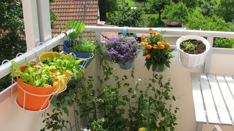 Balkonpflanzen für jeden Standort: Blumen und Kräuter hängen in Töpfen auf einem Balkon