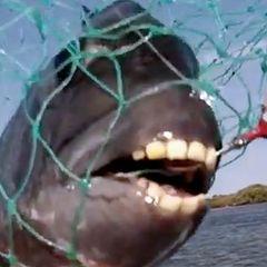 Fische mit Menschenzähnen – gibt es die unheimlichen Wesen wirklich?