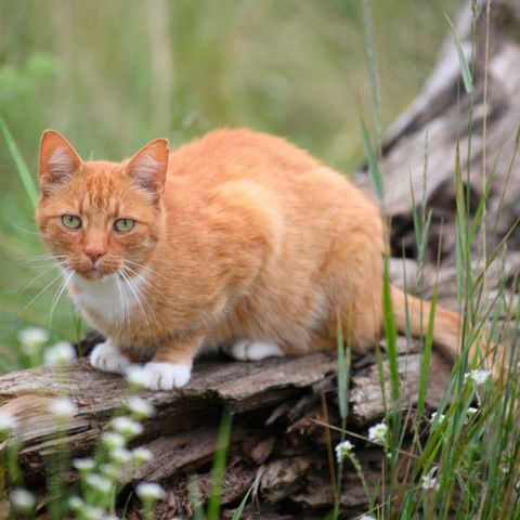 """Großbritannien: Neun Katzen erstochen: """"Katzenmörder von Brighton"""" muss lange in Haft"""
