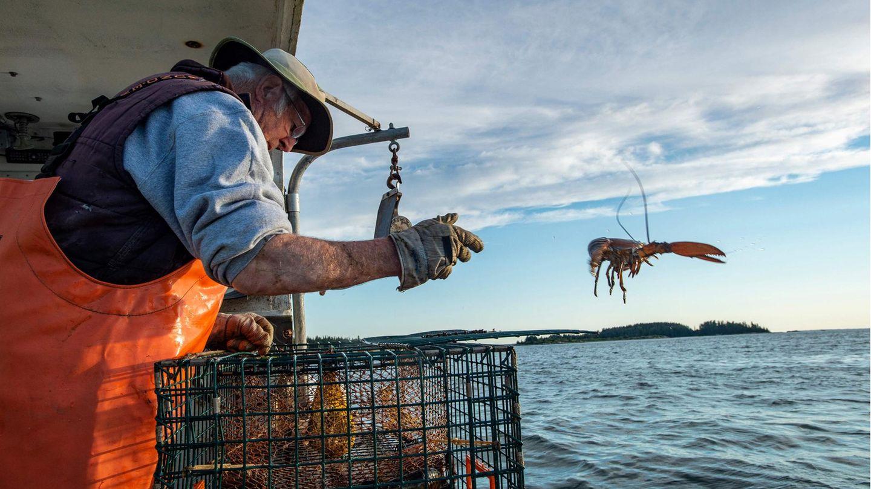 Penobscot Bay, USA. Max Oliver wirft einen zu kleinen Lobster zurück ins Wasser, Der78-Jährige fängt die Krebstiere seit seinem siebten Lebensjahr vor der Küste des Bundesstaates Maine und gehört damiteindeutig zu den Älterenin seinem Beruf. Deutlich älter ist allerdings eine Frau, die ihn noch immer drei Mal pro Woche auf See hinaus begleitet: Virginia Oliver, seine Mutter. Ihr Alter:101.