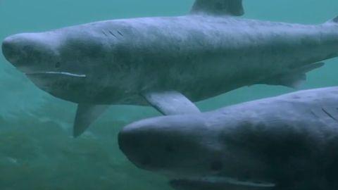 Spektakulär: Einblick in eine bis jetzt unbekannte Unterwasserwelt