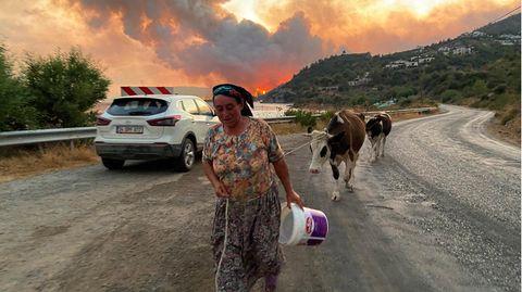 Bodrum, Türkei:Eine Frau flieht mit ihren Tieren vor einem sich ausbreitenden Waldbrand