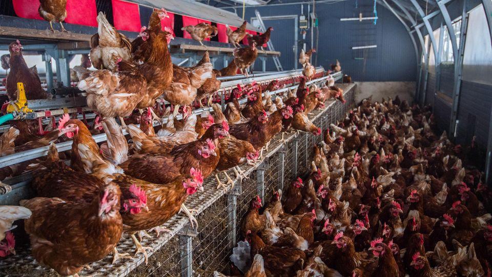 Hühnerhaltung in Deutschland