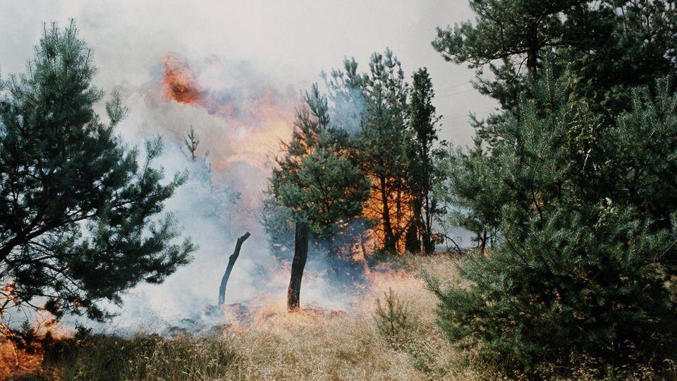 Brennende Bäume in der Nähe von Eschede 1975