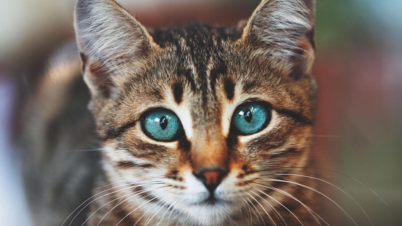 Vermehrtes Katzensterben in Großbritannien