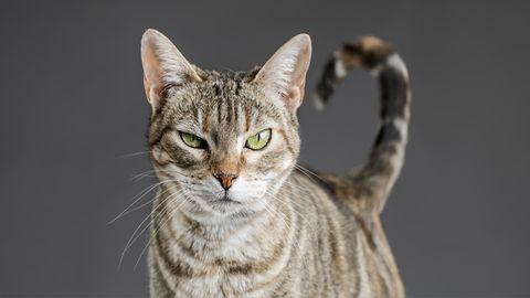Die besten Hörbücher zum Weltkatzentag