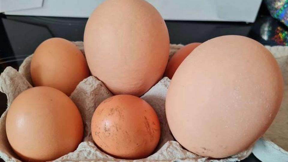Huhn legt drei gigantische Eier – eines enthält eine Überraschung