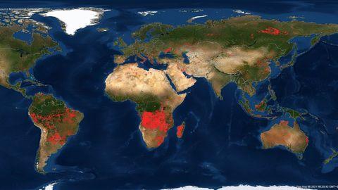 """Hier sieht man das Flammeninferno vom 8. August 2021 weltweit. Jeder rote Punkt ist ein Brandherd. Die Nasa hat Satellitendaten auf einer Weltkarte auf ihrem frei zugänglichen Server FIRMS zusammengeführt. Das steht für """"Fire Information for Ressource Management"""" und soll einen Überblick über die Waldbrandlage verschaffen."""