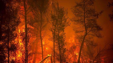 Flammenwand auf der griechischen Insel Euböa