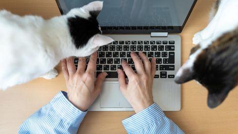 In einer Nürnberger Firma beherbergt Chef Peter Götz Katzen, die als unvermittelbar gelten.
