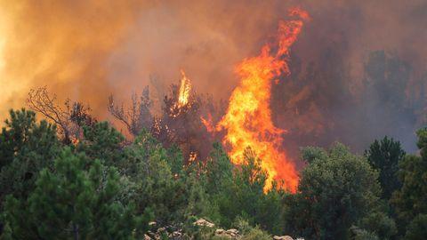 Meterhohe Flammen schlagen aus einem Nadelbaum-Gebüsch