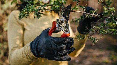 Allzweckwaffe Gartenschere: Frau mit Handschuhe schneidet Ast mit einer Gartenschere ab
