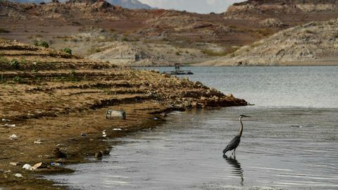 Eisamer Vogel steht im niedrigen Wasser des Lake Mead