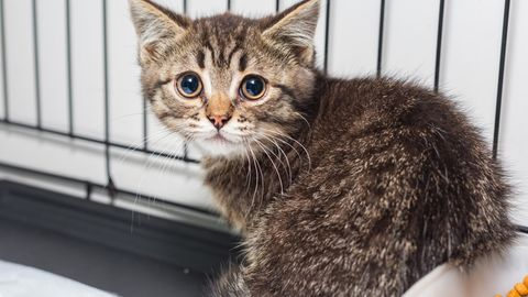 Polizei und Feuerwehr retten verwahrloste Tiere aus Wohnung in Bayern.