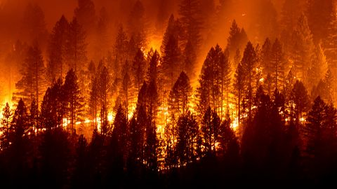 Tausende Menschen auf der Flucht: Neue Waldbrände in Kalifornien.