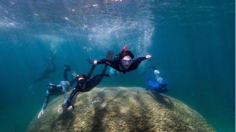 Taucher schwimmen im Great Barrier Reef über eine Koralle
