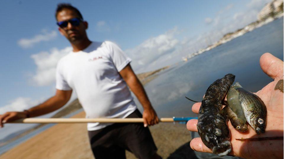 Beamte der Guardia Civil nehmen Proben, um das Fischsterben im Mar Menor zu untersuchen