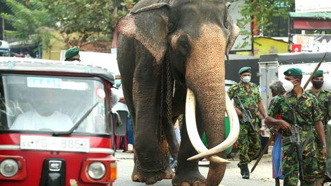 Ein Elefant läuft durch Sri Lankas Stadt Kadugannawa
