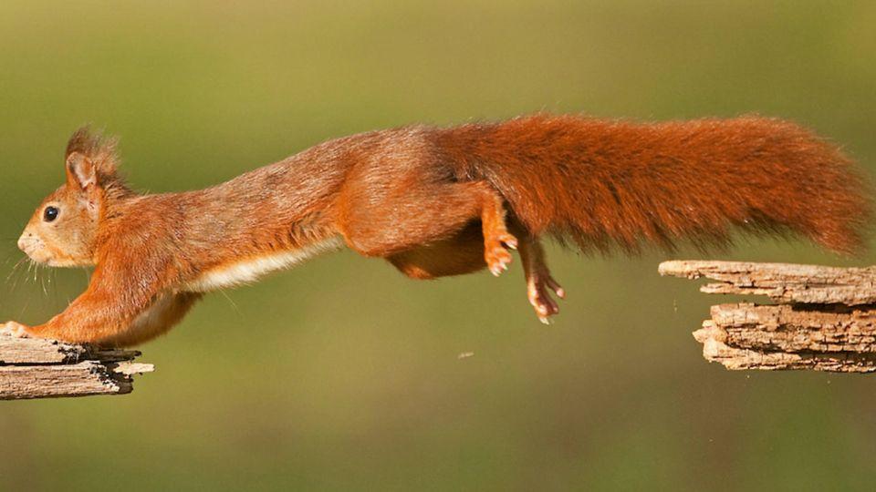 Eichhörnchen in Slow-Motion - Forscher untersuchen das Verhalten der Nagetiere