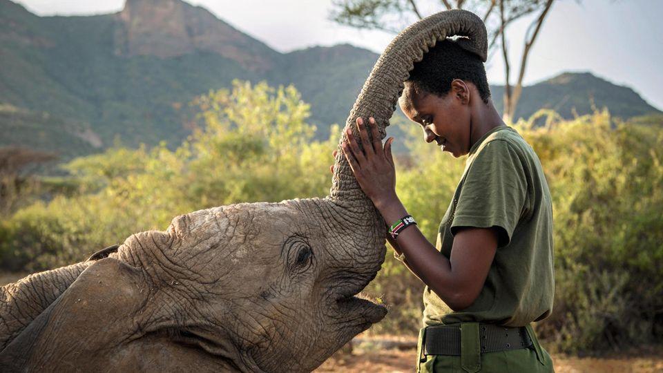 Streicheleinheit: Ein Elefantenkalb krault Wärterin Mary Lengees den Kopf, die revanchiert sich am Rüssel