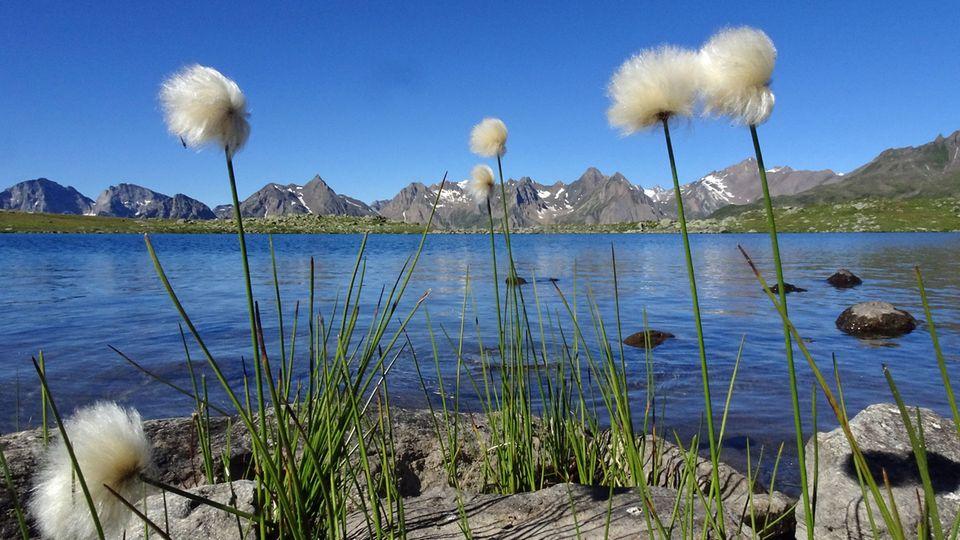 Bild 1 von 14der Fotostrecke zum Klicken: Wollgras am Seeufer hinter dem Passo San Giacomo, einer der vielen Seen entlang der Route.