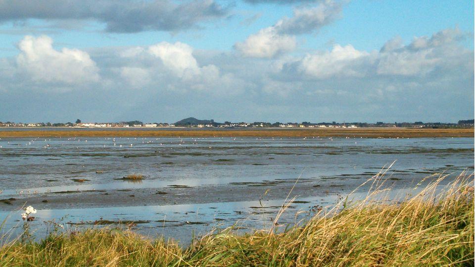 Das North Bull Island Reserve ist eine durch Ebbe und Flut entstandene Insel in der Bucht von Dublin.
