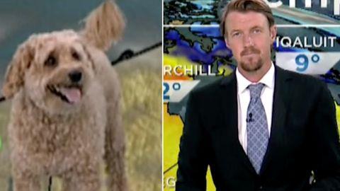 Neben der Wettervorhersage von heute: Moderator bekommt überraschenden Besuch von seinem Hund