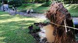 Dieser Baum im Central Park hat angesichts des Windes und des aufgeweichten Bodens den Halt verloren und ist umgestürzt