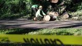 Diese Männer machen sich daran, die umgestürzten Bäume zu zersägen und den Weg im Central Park wieder frei zu machen