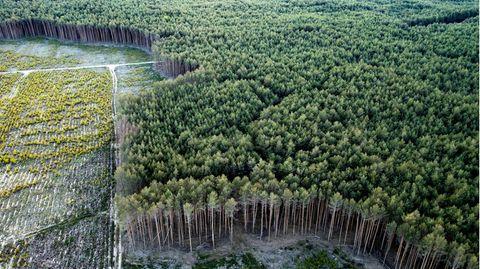 Waldprojekt Treuenbrietzen