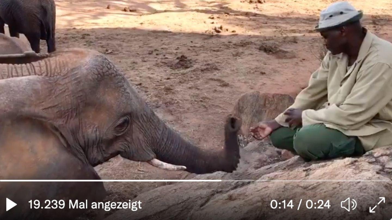 Elefant und Pfleger